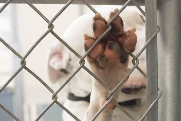 Shelter dog paw on chain link fence picture id647438098?b=1&k=6&m=647438098&s=612x612&w=0&h=zet1xkfmjyhkchbg26qsdgbxayufzpz 6pgu6dzjv w=