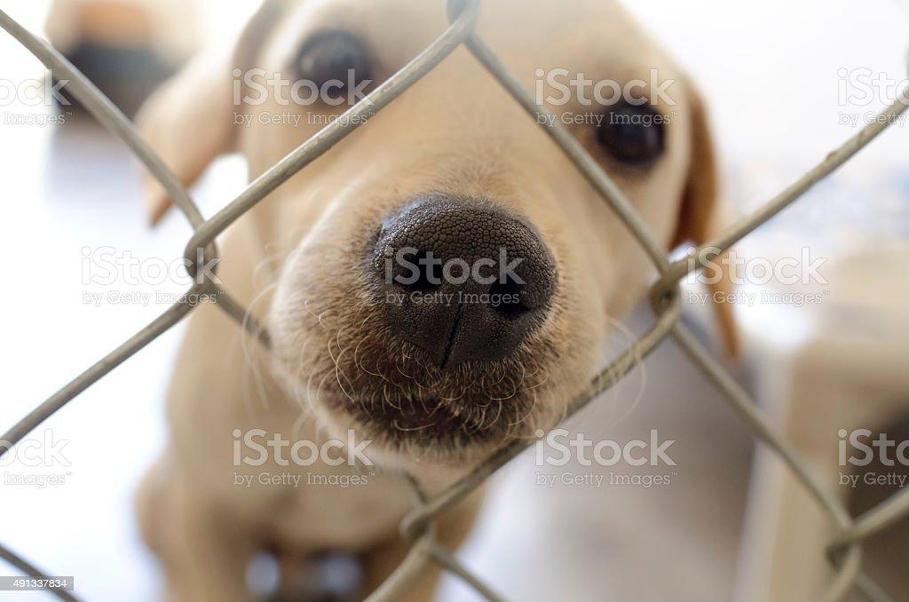 Shelter Hund – Foto