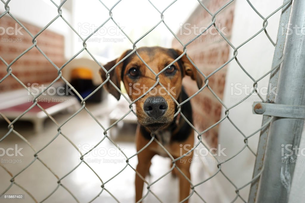Shelter Dog - Royalty-free Abandoned Stock Photo