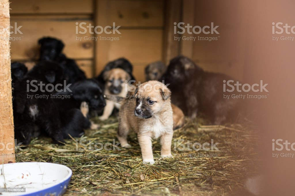 Shelter for homeless abandoned puppies, waiting for a new owner stock photo