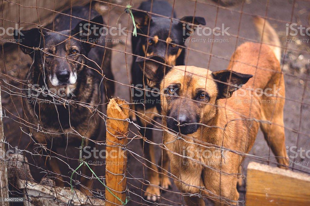 Shelter for homeless dogs stock photo