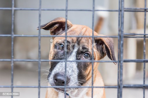 istock Shelter for homeless dogs, waiting for a new owner 523040594
