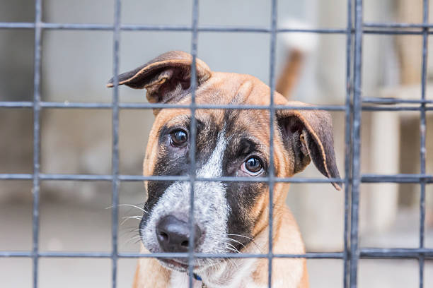 Shelter for homeless dogs, waiting for a new owner stock photo