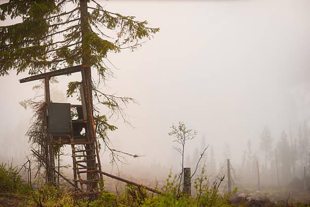 shelter for moose hunting - älg sverige bildbanksfoton och bilder