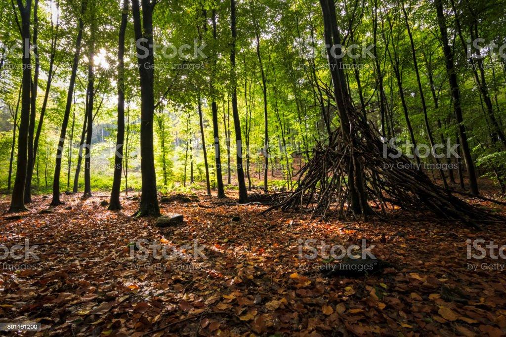 Abri en automne soleil boisé chaud et doré à travers les arbres - Photo