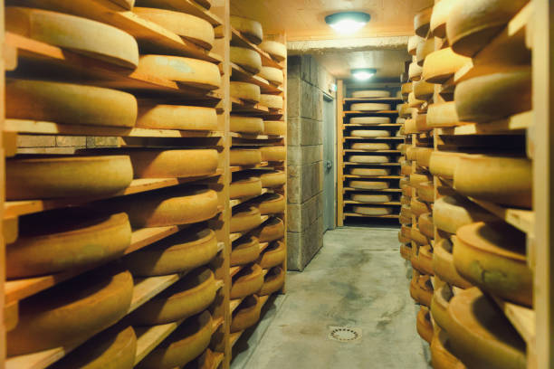 shelves of aging cheese at ripening cellar dairy france - ser comte zdjęcia i obrazy z banku zdjęć