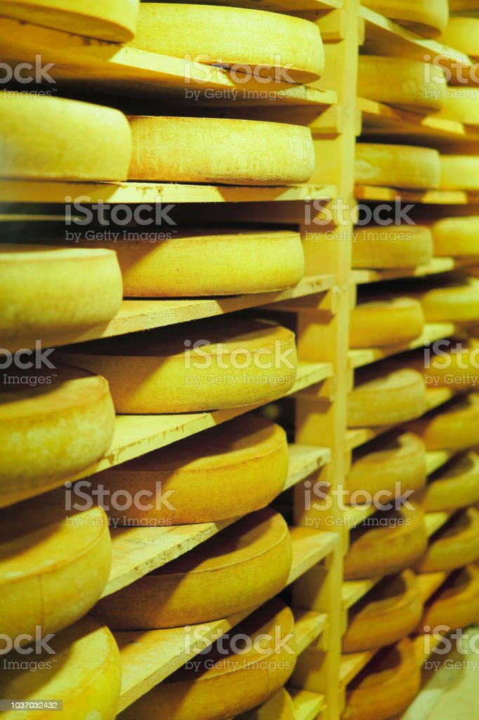 Shelves of aging Cheese on wooden shelves in maturing cellar in...