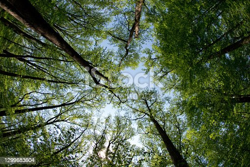 istock Shenandoah National Park - Woods & Treeline - Virginia 1299683604