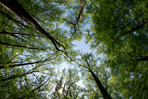 Shenandoah National Park - Woods & Treeline  - Virginia