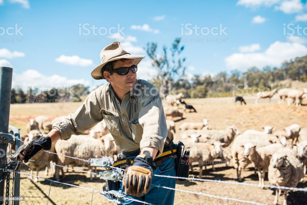 Shepard with his herd of sheep stock photo