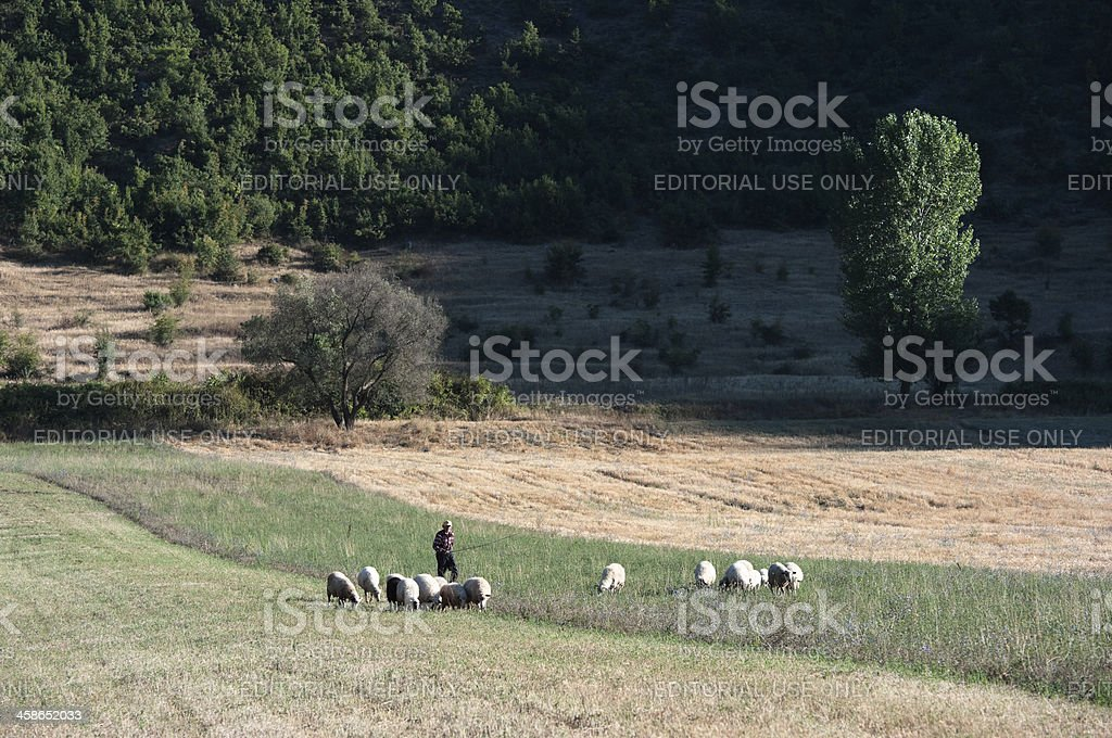 Shepherd And Flock Of Sheep royalty-free stock photo