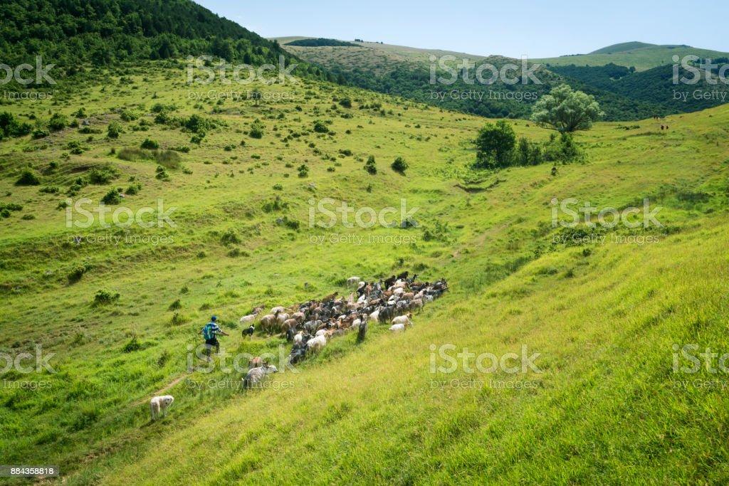 Shepherd and herd of goats in Abruzzi, Italy stock photo