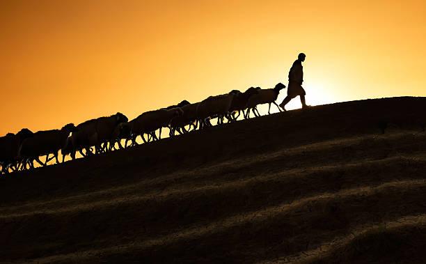 Pastore che le capre e pecore al tramonto tempo - foto stock