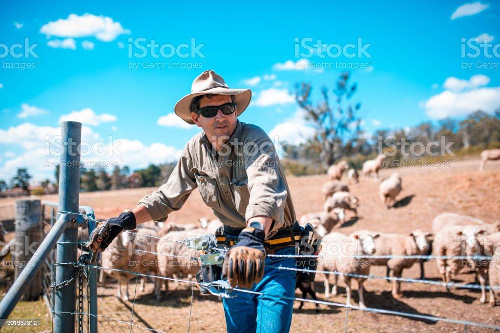 shepherd – Foto