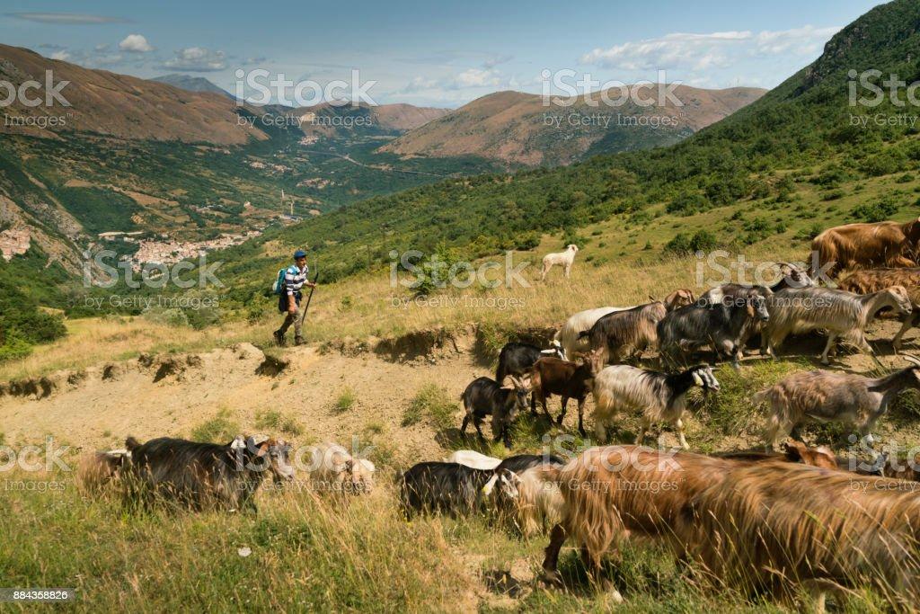 Shepherd watches herd of goats in Italian mountains stock photo