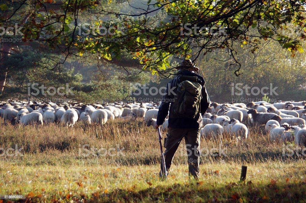 Shepherd watching his herd stock photo