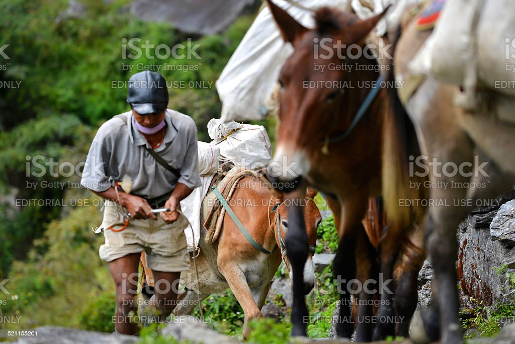 Shepherd with a caravan of donkeys in the Himalayas stock photo