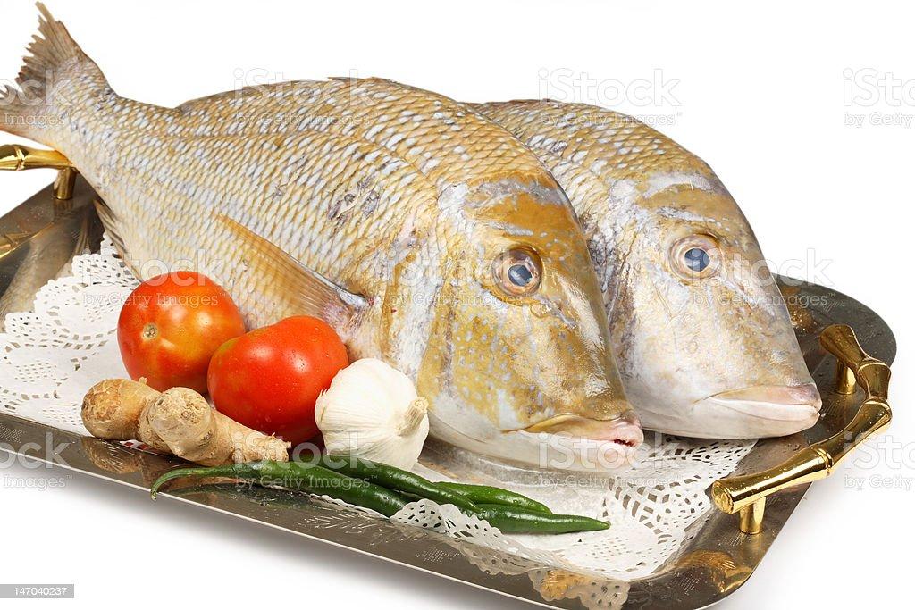 sheri fish royalty-free stock photo