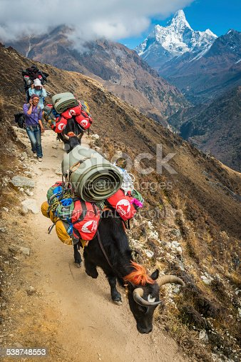 Namche Bazaar, Nepal - 2nd November 2014: Young Sherpa woman drving yaks loaded with expedition equipment whilst talking on a cellphone along the dusty Everest Base Camp trail in the Khumbu valley below the iconic snow capped spire of Ama Dablam deep in the Himalaya mountain wilderness of the Sagarmatha National Park, Nepal.