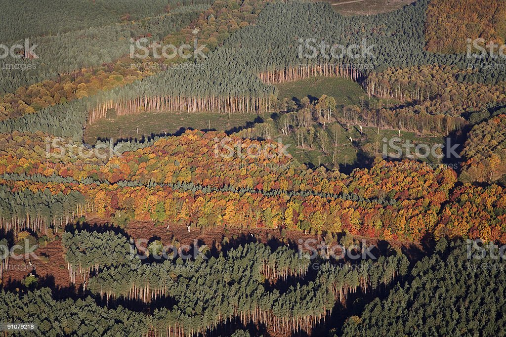 Sherwood Forest Aerial stock photo