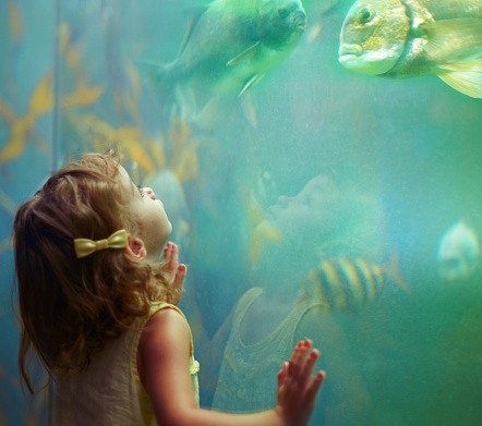 Cropped shot of a little girl on an outing to the aquariumhttp://195.154.178.81/DATA/i_collage/pi/shoots/783341.jpg