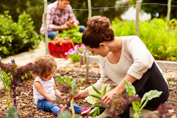 She's a great little gardener Shot of a smiling couple with their little girl working in their organic garden community garden stock pictures, royalty-free photos & images