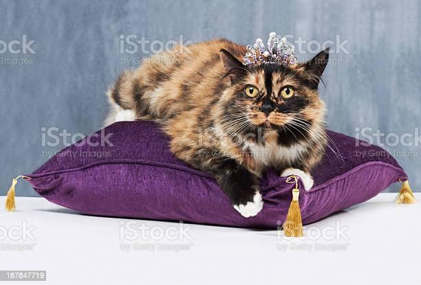 Shes a pampered pet picture id187847719?b=1&k=6&m=187847719&s=612x612&h=gpjadqmbar0p6xpyibir oghiu2ejopi3ahvbcybl5g=
