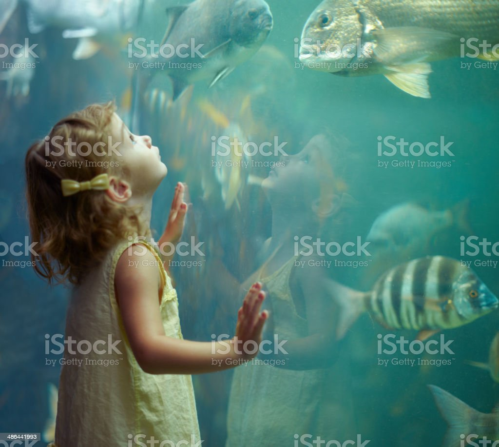 She's focused on those fish stock photo