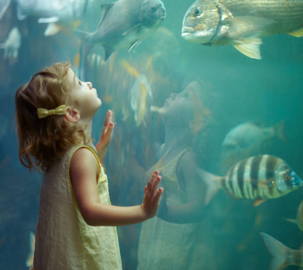 She's focused on those fish Shot of a little girl staring in awe at the fish in the aquariumhttp://195.154.178.81/DATA/i_collage/pi/shoots/783341.jpg aquarium stock pictures, royalty-free photos & images
