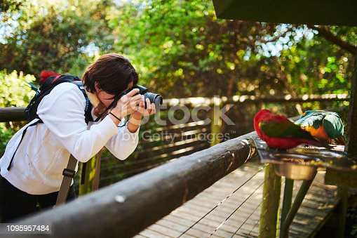 Cropped shot of an attractive young female birdwatcher snapping pictures while exploring outdoors