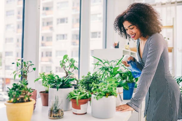 She's plant-savvy Cropped shot of an attractive young business owner surrounded by plants houseplant stock pictures, royalty-free photos & images