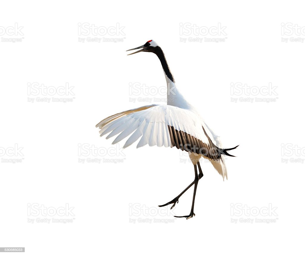 Sheyang Red Crowned Crane Reserve stock photo
