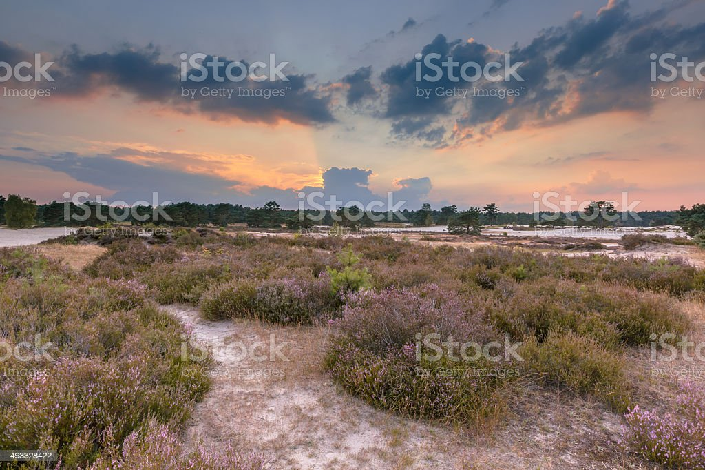 Shifting sands and heathland stock photo