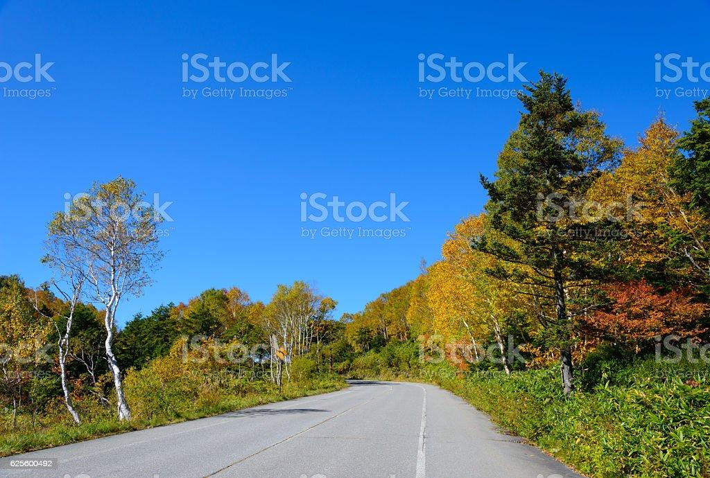 Shiga Kusatsu road in autumn stock photo
