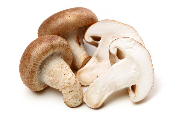 shiitake mushroom on the white background - group of people стоковые фото и изображения