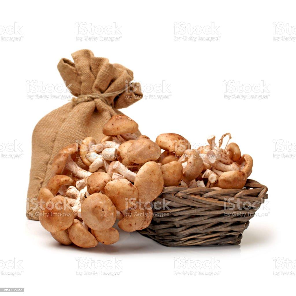 Shiitake mushroom on the White background foto stock royalty-free