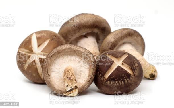 Foto de Champignon Shiitake No Fundo Branco e mais fotos de stock de Alimentação Saudável