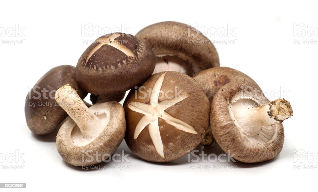 Champignon Shiitake no fundo branco - Foto de stock de Alimentação Saudável royalty-free