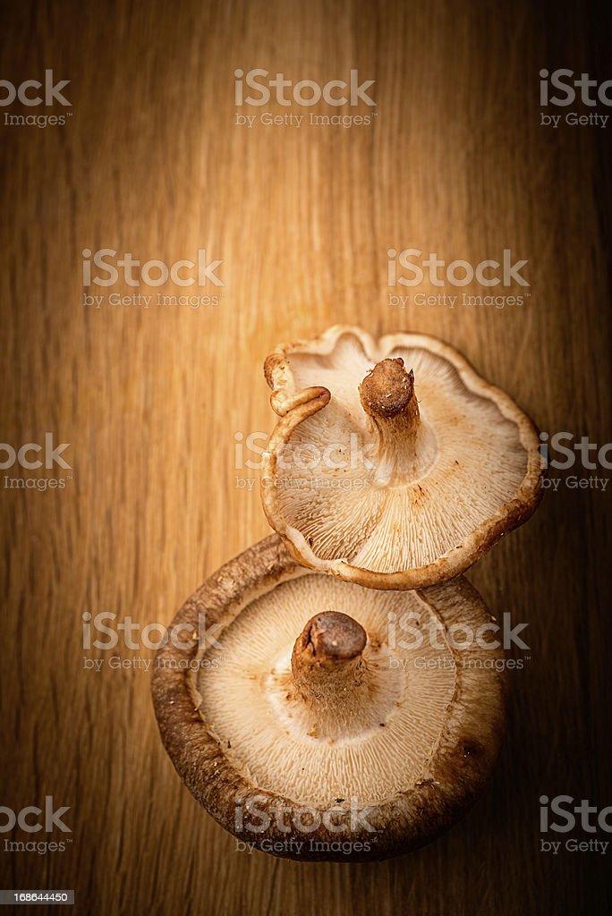 Shiitake Mushrooms royalty-free stock photo