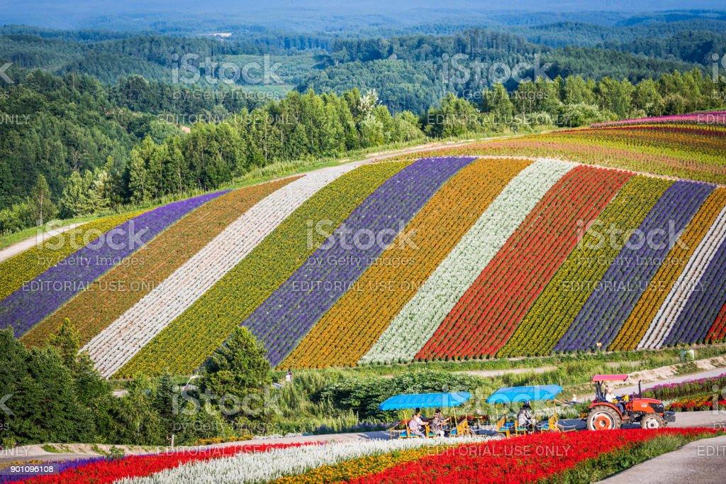 Shikisai-no-Oka Summer Flower Hills & Tractor Bus stock photo