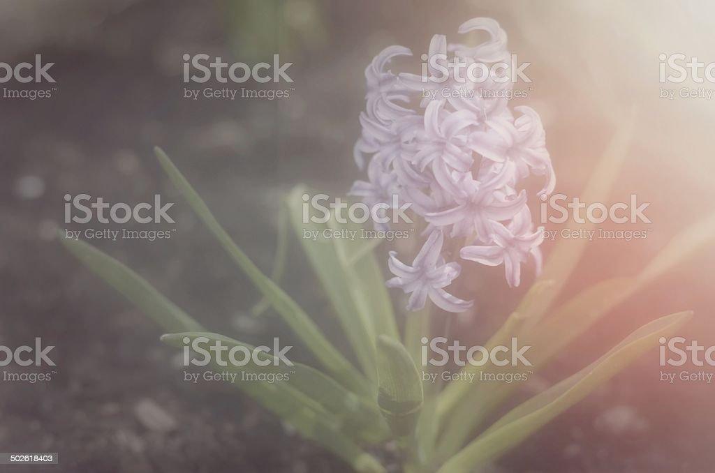 Shine stock photo