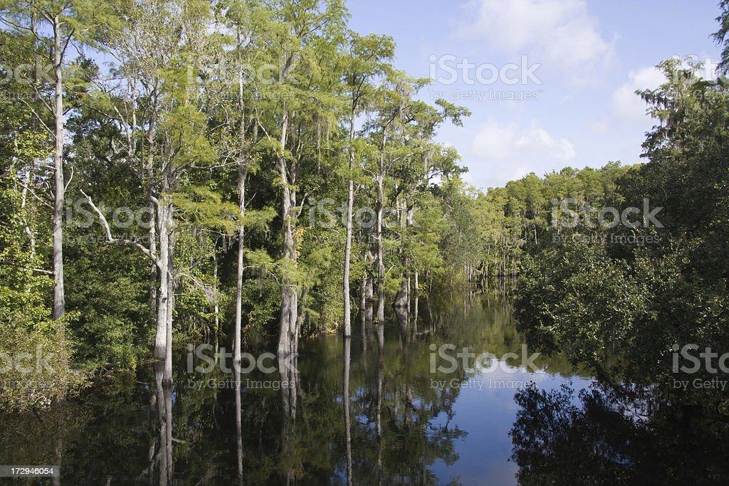 Shingle Creek Preservation Project royalty-free stock photo