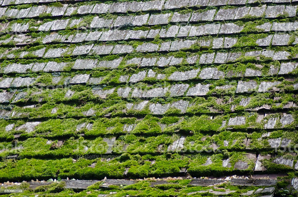 Shingled Roof with Moss stock photo