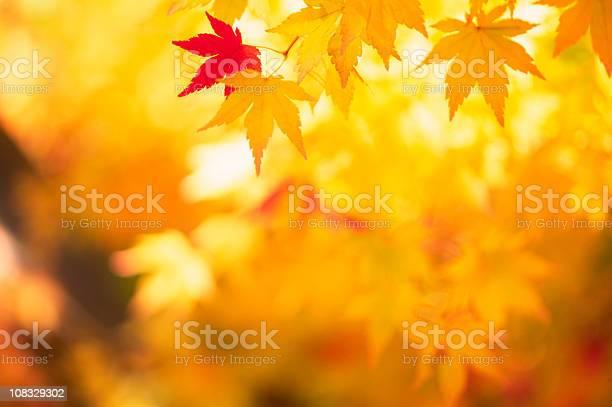 Photo of Shining Autumn Leaves