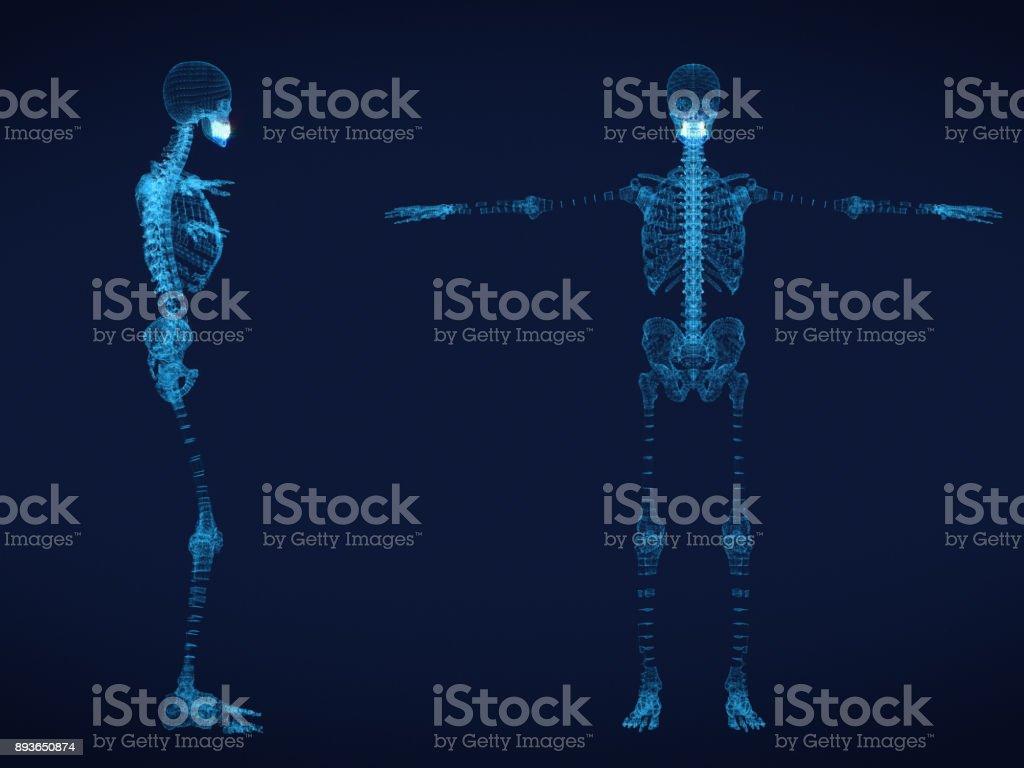 Leuchtende Punkte Und Linie Von Skelett Körper Menschlichen 3d ...