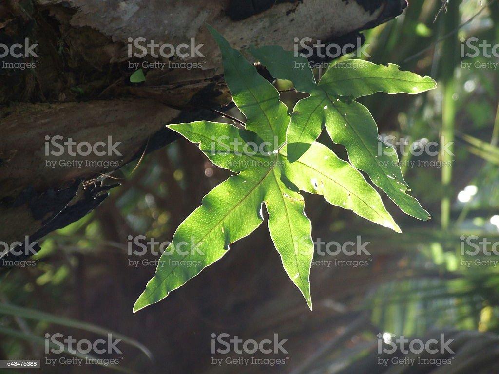 Shining leaf stock photo