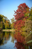 istock Shining red autumn tree on the edge of a lake 903696992