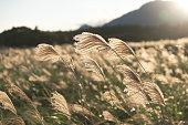 輝くシルバーの芝生