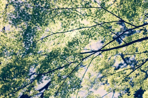 輝く木。 ストックフォト