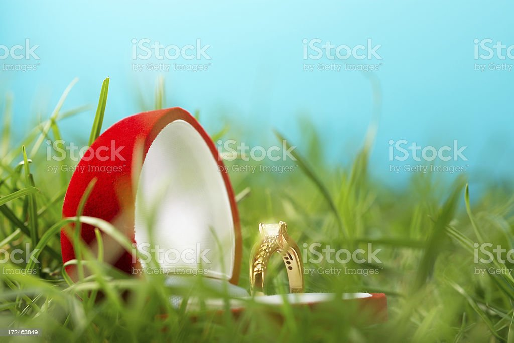 Shining wedding rings in a gift box on grass royalty-free stock photo